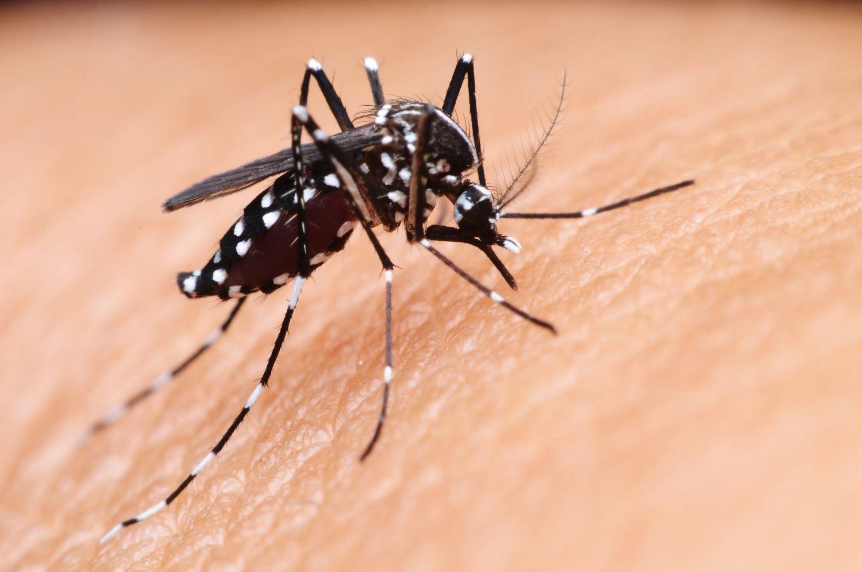Adulticidno tretiranje komaraca na području grada Šibenika