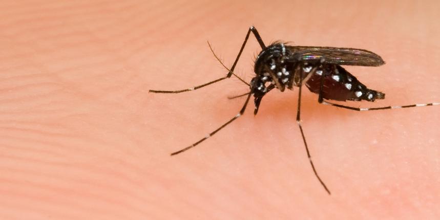 Raspored tretiranja tigrastih komaraca na području grada Šibenika
