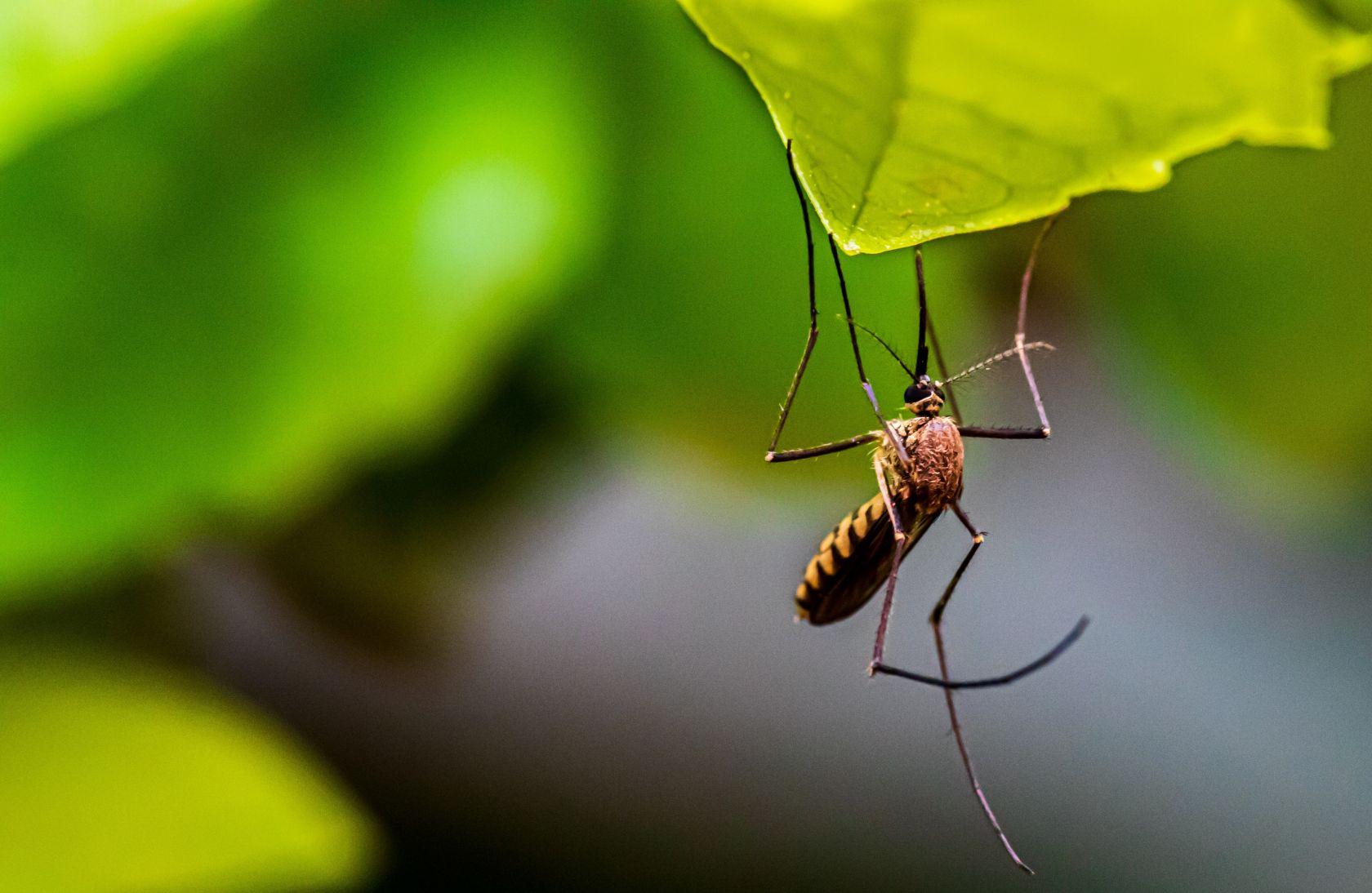 Obavijest građanima: Zamagljivanje komaraca u noći sa 7. na 8. rujna